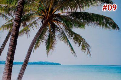 09 palm beach